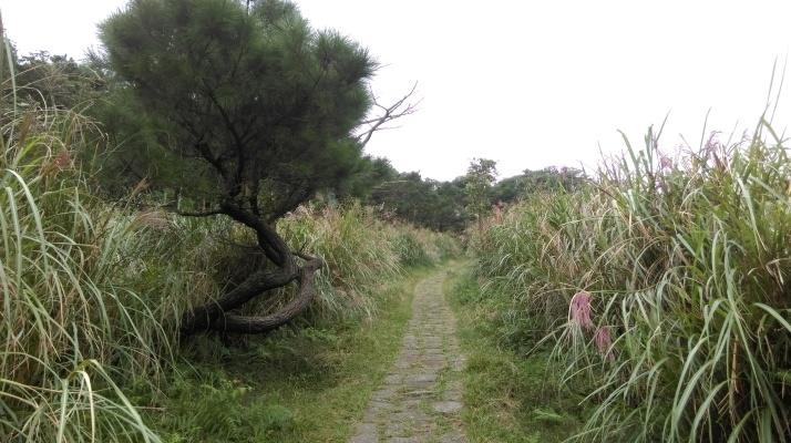 trail to Qingtiangang