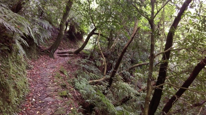 descending to the stream