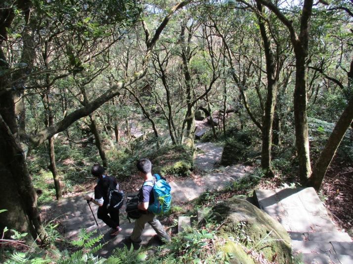 descending through a grove of trees