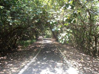 forest in Maoli