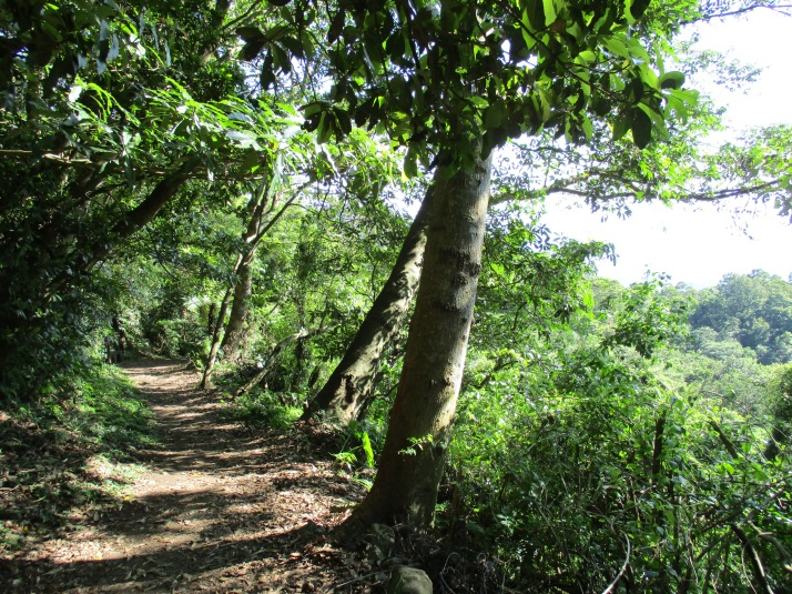 trail around Mt Shamao