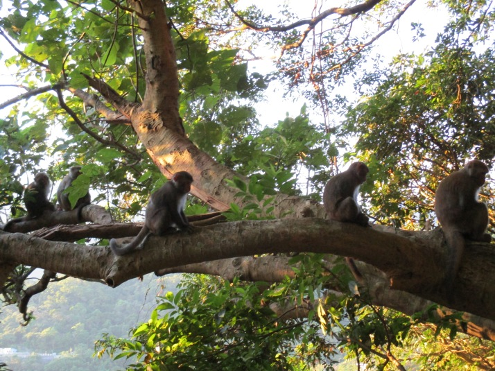 monkeys on the trail