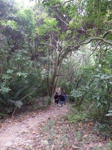 Mingjushan Hiking Trail