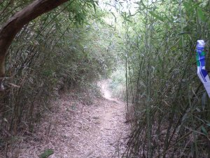 Mingjushan trail