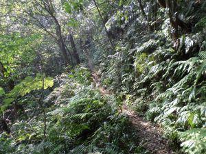 trail along the hillside
