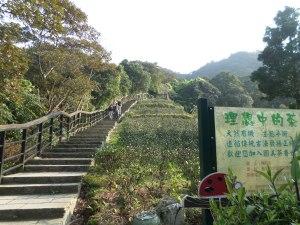 going down past a tea field