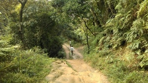 trail leading away from Fude Temple