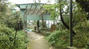 walk under the green shack