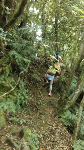 trail to Zhongyang