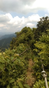 trail going the peak
