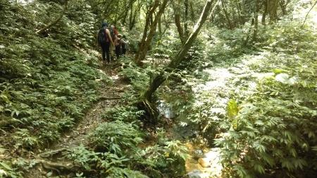trail following a stream