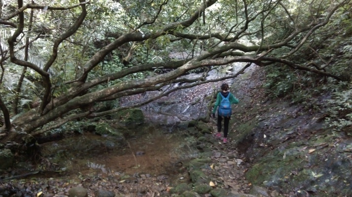 trail following the stream