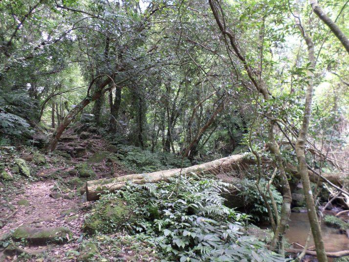 trail following the stream away from Back Cihu Lake