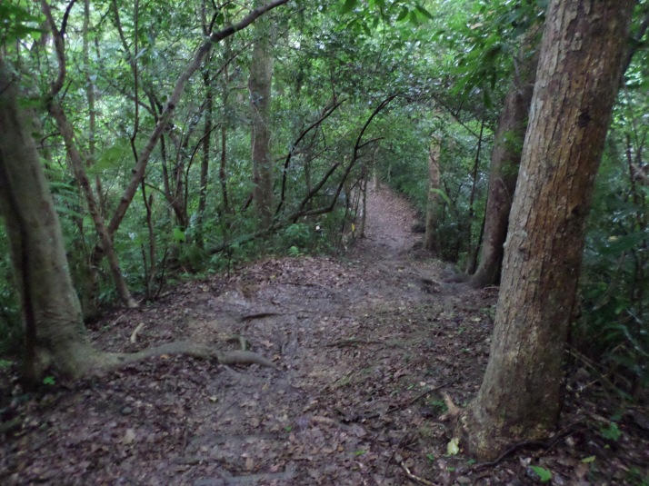 trail descending from White Rock