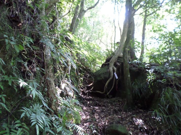 trail going up Cimu Peak