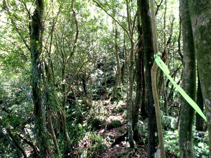 trail leading away from Cimu Peak
