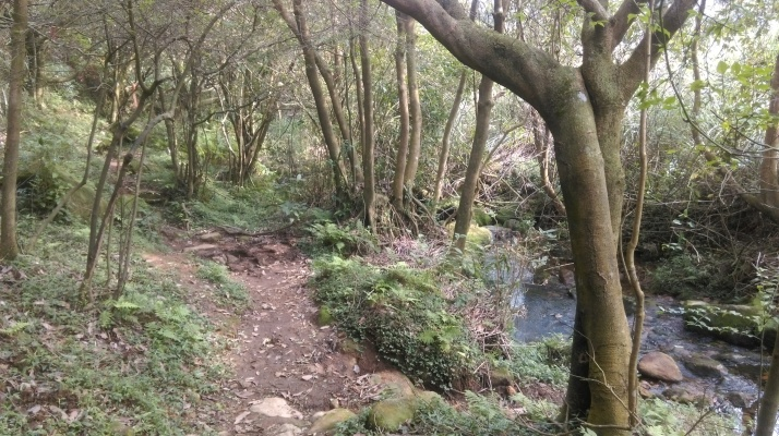 trail following the stream into the trees