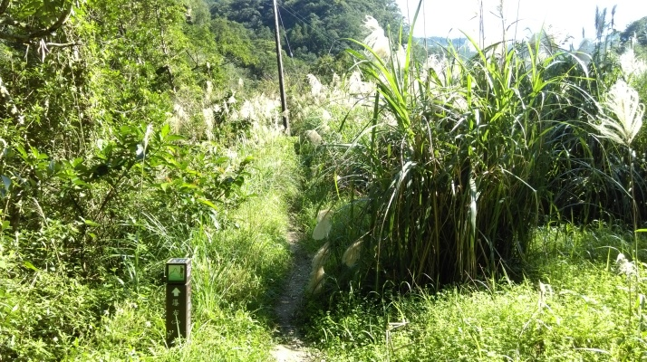 trail entering grasses