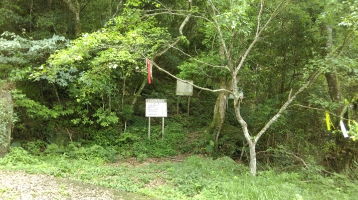 start of the trail to the ancient tree grove