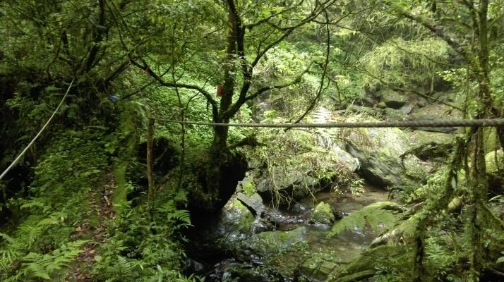 log bridge crossing the stream