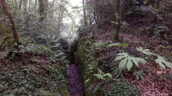 trail through a narrow gulley