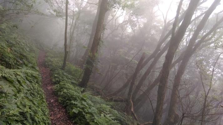 flat trail along the hillside