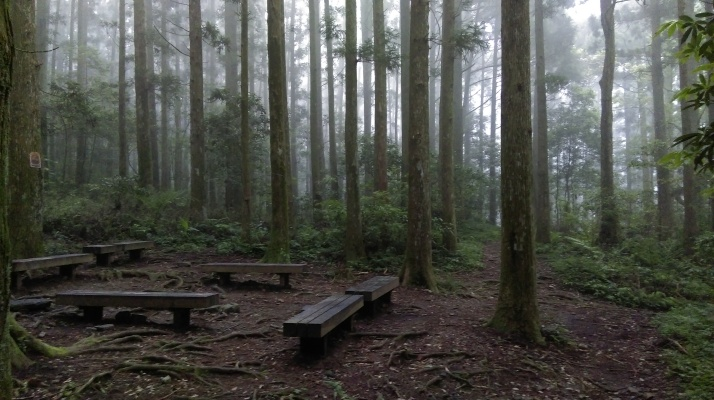 rest area amongst the Japanese cedars