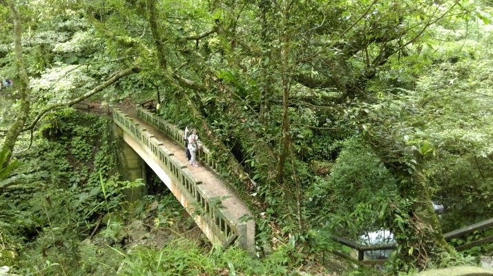 bridge crossing the stream